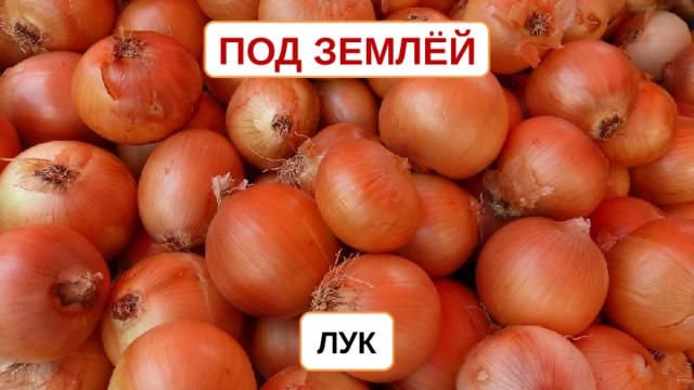 ПОД ЗЕМЛЁЙ ЛУК