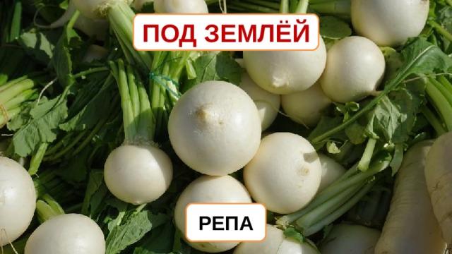 ПОД ЗЕМЛЁЙ РЕПА
