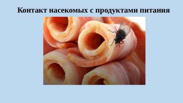 Контакт насекомых с продуктами питания