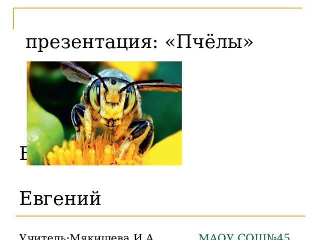презентация: «Пчёлы»     Евдокеевич  Евгений    Учитель:Мякишева И.А. МАОУ СОШ№45 г.Тюмени