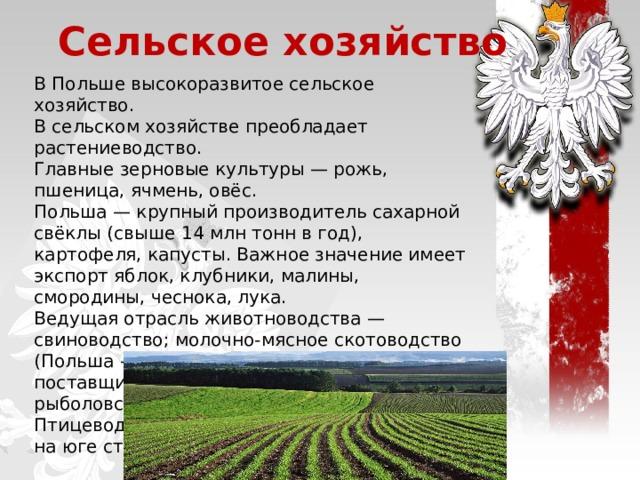Сельское хозяйство В Польше высокоразвитое сельское хозяйство. В сельском хозяйстве преобладает растениеводство. Главные зерновые культуры— рожь, пшеница, ячмень, овёс. Польша— крупный производитель сахарной свёклы (свыше 14млн тонн в год), картофеля, капусты. Важное значение имеет экспорт яблок, клубники, малины, смородины, чеснока, лука. Ведущая отрасль животноводства— свиноводство; молочно-мясное скотоводство (Польша— один из крупнейших в Европе поставщиков яиц); пчеловодство. Морское рыболовство и оленеводство. Птицеводство и овцеводство распространено на юге страны.