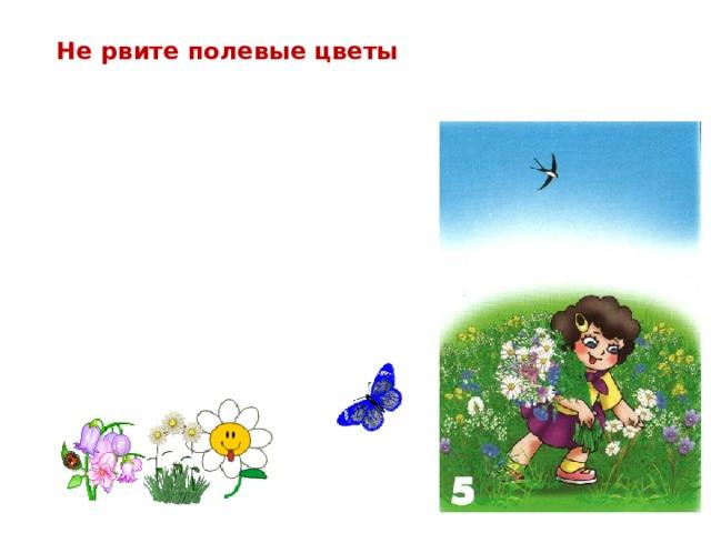 Не рвите полевые цветы Цветы украшают луга и леса Но это не только природы краса- В них пчёлы находят целительный дар, И бабочки пьют из них сладкий нектар.    Не надо, друзья, их бессмысленно рвать,  Не надо букеты из них составлять…  Завянут букеты…Погибнут цветы… И больше не будет такой красоты!