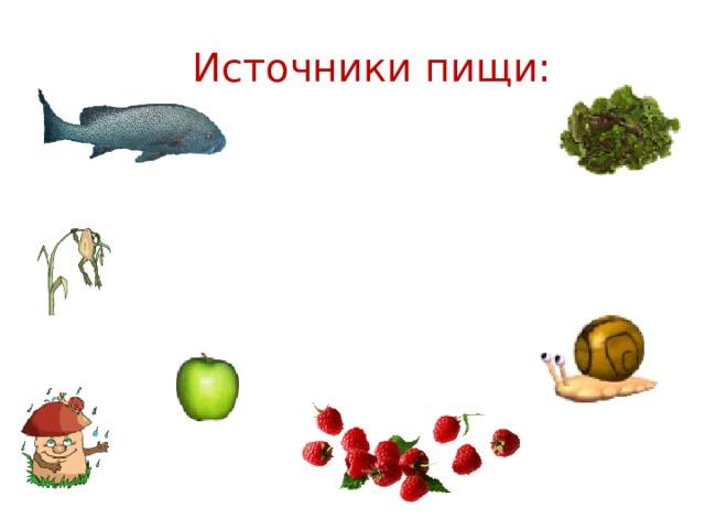 Источники пищи: Съедобные растения, грибы Мясо зверей, рыб, пресмыкающихся (змей, ящериц), крупных насекомых (саранча)