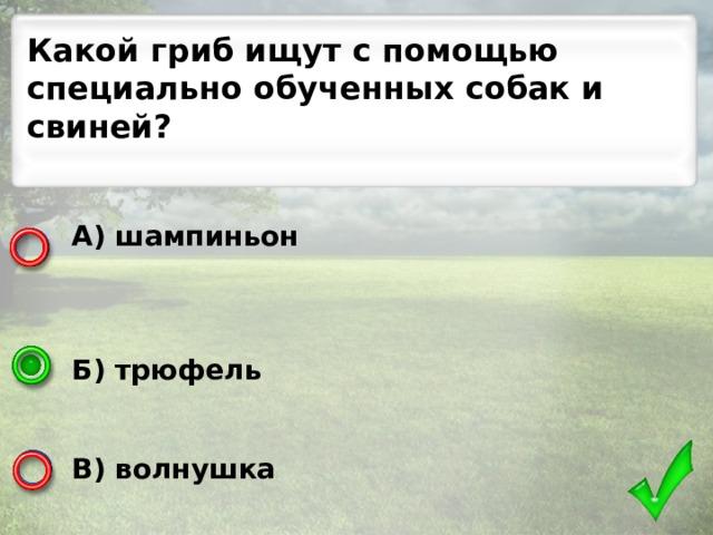 Какой гриб ищут с помощью специально обученных собак и свиней? А) шампиньон    Б) трюфель   В) волнушка