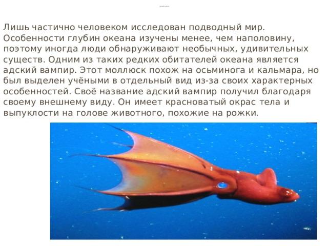Адский вампир Лишь частично человеком исследован подводный мир. Особенности глубин океана изучены менее, чем наполовину, поэтому иногда люди обнаруживают необычных, удивительных существ. Одним из таких редких обитателей океана является адский вампир. Этот моллюск похож на осьминога и кальмара, но был выделен учёными в отдельный вид из-за своих характерных особенностей. Своё название адский вампир получил благодаря своему внешнему виду. Он имеет красноватый окрас тела и выпуклости на голове животного, похожие на рожки.