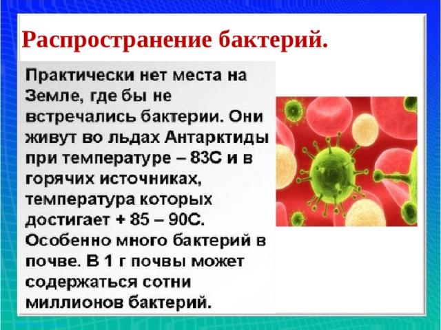 Распространение бактерий.