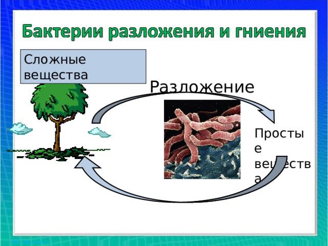 Сложные вещества Разложение Простые вещества