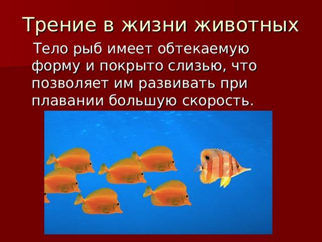 Трение в жизни животных  Тело рыб имеет обтекаемую форму и покрыто слизью, что позволяет им развивать при плавании большую скорость.