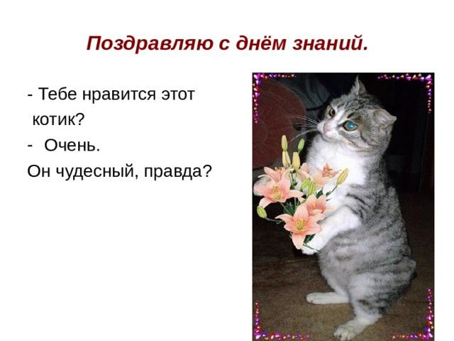 Поздравляю с днём  знаний. - Тебе нравится этот  котик? Очень. Он чудесный, правда?