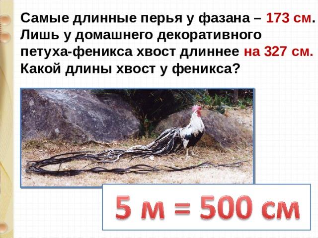 Самые длинные перья у фазана – 173 см . Лишь у домашнего декоративного петуха-феникса хвост длиннее на 327 см. Какой длины хвост у феникса?