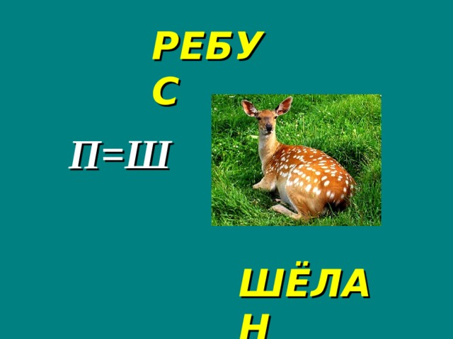 РЕБУС П=Ш ШЁЛАН
