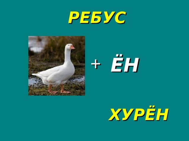 РЕБУС + ЁН ХУРЁН