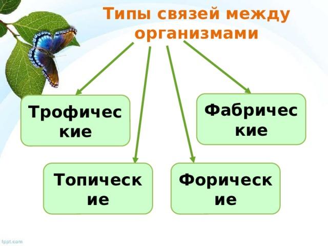 Типы связей между организмами Фабрические Трофические Топические Форические