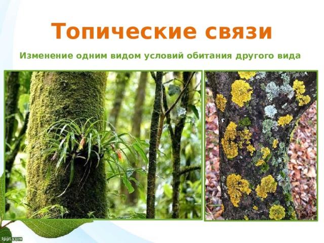 Топические связи Изменение одним видом условий обитания другого вида