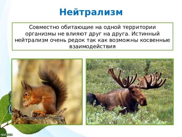 Нейтрализм Совместно обитающие на одной территории организмы не влияют друг на друга. Истинный нейтрализм очень редок так как возможны косвенные взаимодействия