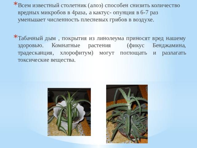 Всем известный столетник (алоэ) способен снизить количество вредных микробов в 4раза , а кактус- опунция в 6-7 раз уменьшает численность плесневых грибов в воздухе. Табачный дым , покрытия из линолеума приносят вред нашему здоровью. Комнатные растения (фикус Бенджамина, традесканция, хлорофитум) могут поглощать и разлагать токсические вещества.
