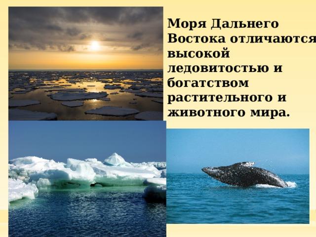 Моря Дальнего Востока отличаются высокой ледовитостью и богатством растительного и животного мира.