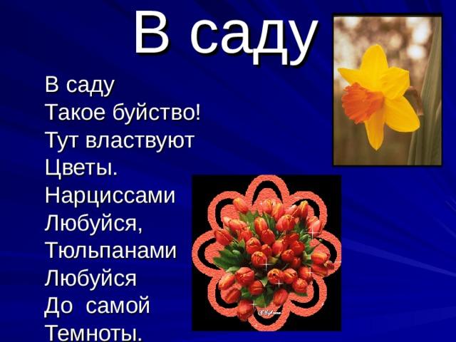 В саду  В саду  Такое буйство!  Тут властвуют  Цветы.  Нарциссами  Любуйся,  Тюльпанами  Любуйся  До самой  Темноты.