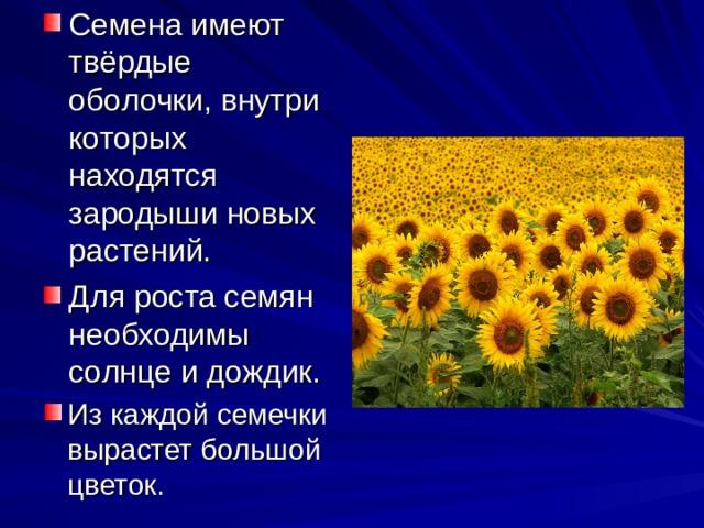 Семена имеют твёрдые оболочки, внутри которых находятся зародыши новых растений. Для роста семян необходимы солнце и дождик. Из каждой семечки вырастет большой цветок.