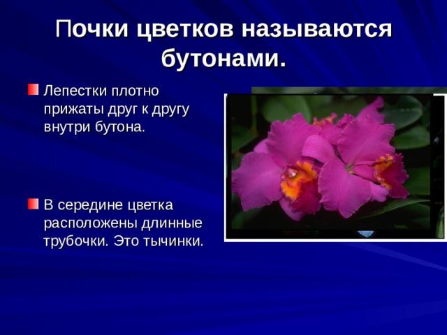 П очки цветков называются бутонами.