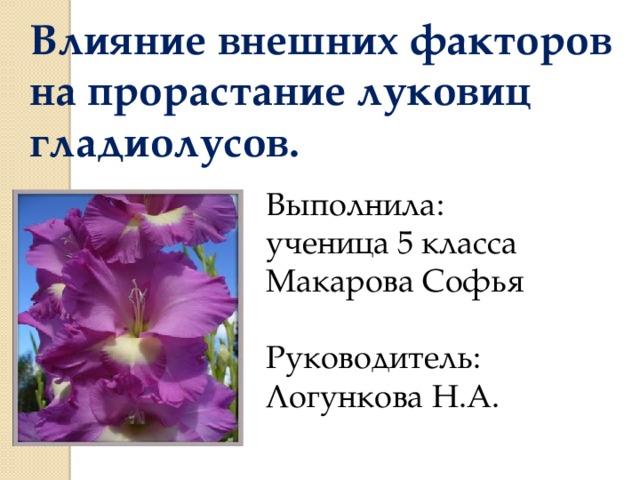 Влияние внешних факторов на прорастание луковиц гладиолусов. Выполнила: ученица 5 класса Макарова Софья Руководитель: Логункова Н.А.