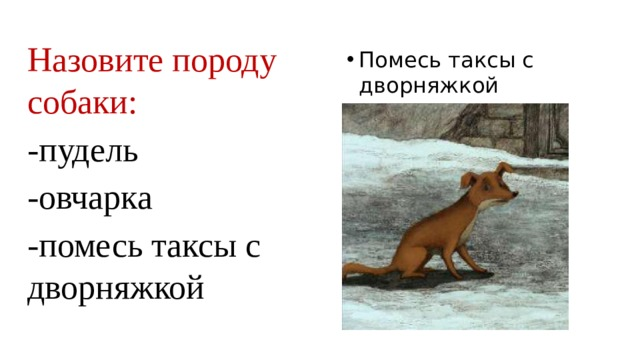 Назовите породу собаки: -пудель -овчарка -помесь таксы с дворняжкой