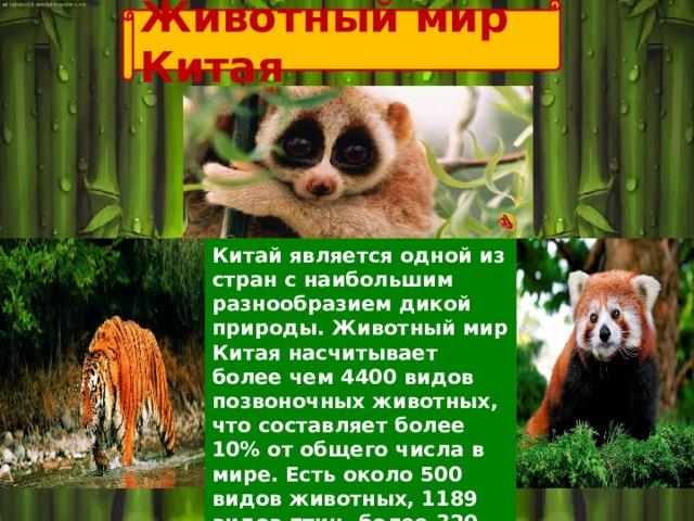 Животный мир Китая Китай является одной из стран с наибольшим разнообразием дикой природы. Животный мир Китая насчитывает более чем 4400 видов позвоночных животных, что составляет более 10% от общего числа в мире. Есть около 500 видов животных, 1189 видов птиц, более 320 видов рептилий и 210 видов земноводных.
