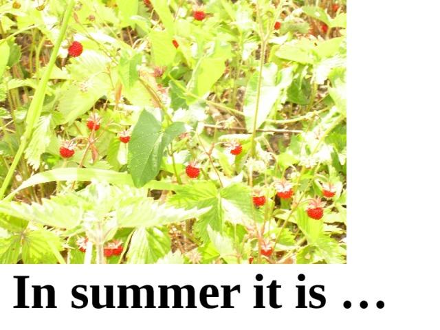 In summer it is …