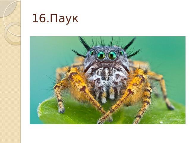 16.Паук