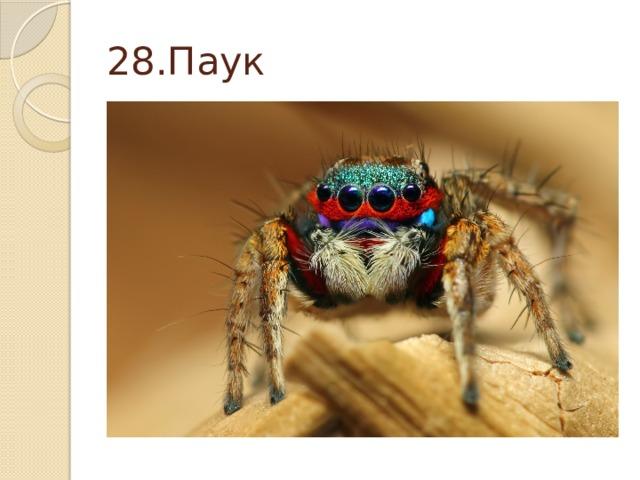 28.Паук