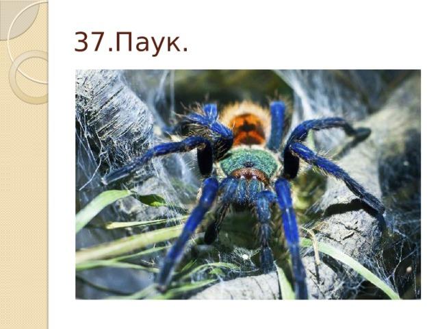 37.Паук.