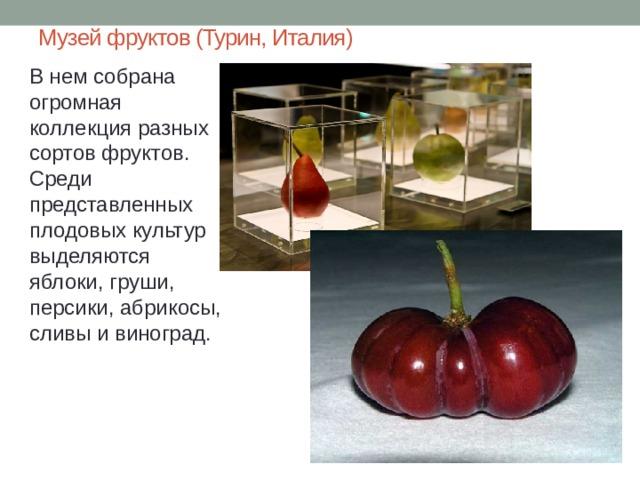 Музей фруктов (Турин, Италия) В нем собрана огромная коллекция разных сортов фруктов. Среди представленных плодовых культур выделяются яблоки, груши, персики, абрикосы, сливы и виноград.