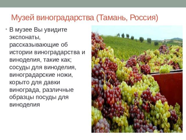 Музей виноградарства (Тамань, Россия)
