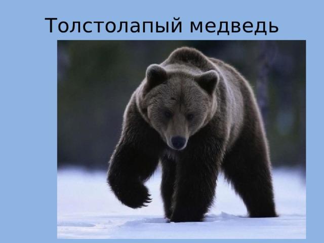 Толстолапый медведь