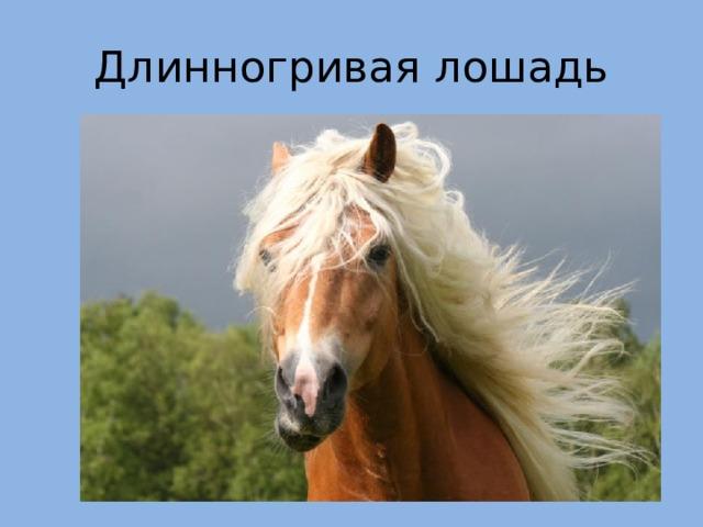 Длинногривая лошадь