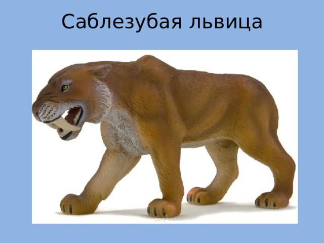 Саблезубая львица