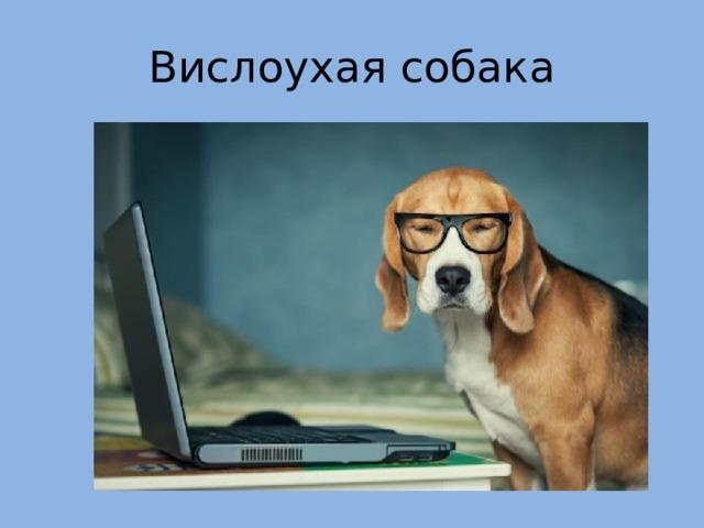 Вислоухая собака