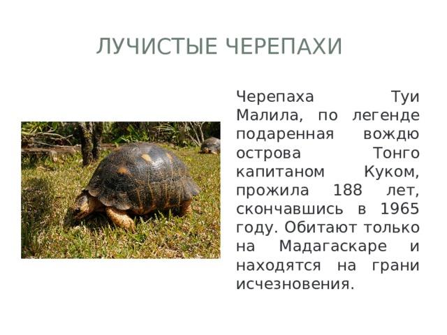 Лучистые черепахи Черепаха Туи Малила, по легенде подаренная вождю острова Тонго капитаном Куком, прожила 188 лет, скончавшись в 1965 году. Обитают только на Мадагаскаре и находятся на грани исчезновения.