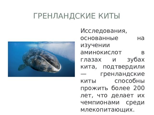 Гренландские киты Исследования, основанные на изучении аминокислот в глазах и зубах кита, подтвердили — гренландские киты способны прожить более 200 лет, что делает их чемпионами среди млекопитающих.