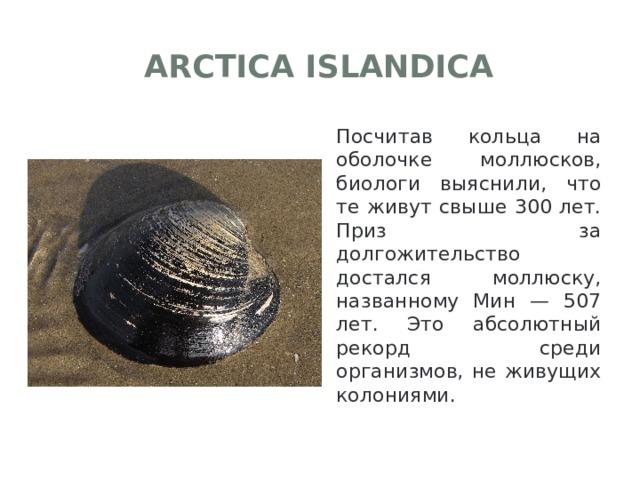 Arctica islandica Посчитав кольца на оболочке моллюсков, биологи выяснили, что те живут свыше 300 лет. Приз за долгожительство достался моллюску, названному Мин — 507 лет. Это абсолютный рекорд среди организмов, не живущих колониями.