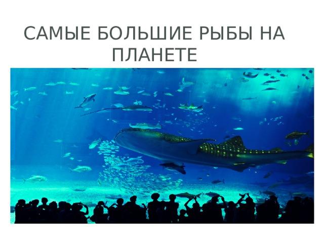 Самые большие рыбы на планете