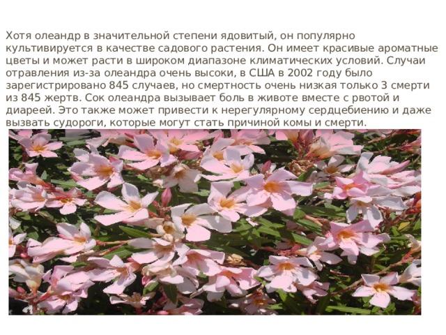 Олеандр Хотя олеандр в значительной степени ядовитый, он популярно культивируется в качестве садового растения. Он имеет красивые ароматные цветы и может расти в широком диапазоне климатических условий. Случаи отравления из-за олеандра очень высоки, в США в 2002 году было зарегистрировано 845 случаев, но смертность очень низкая только 3 смерти из 845 жертв. Сок олеандра вызывает боль в животе вместе с рвотой и диареей. Это также может привести к нерегулярному сердцебиению и даже вызвать судороги, которые могут стать причиной комы и смерти.