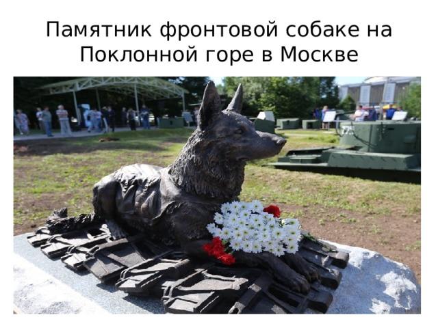 Памятник фронтовой собаке на Поклонной горе в Москве