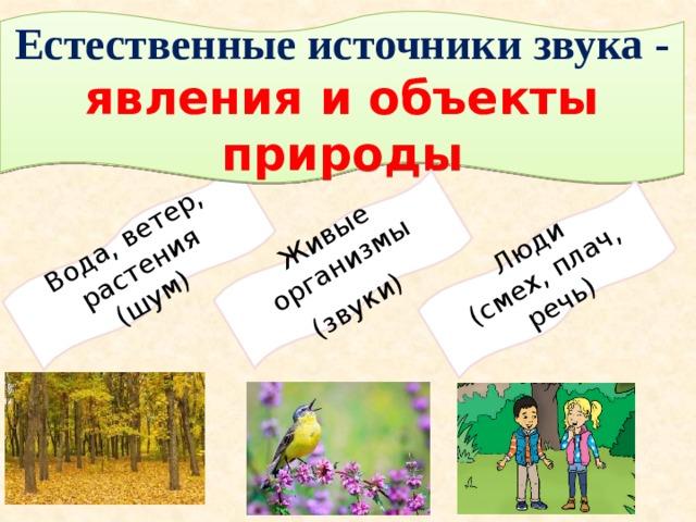 Вода, ветер, растения (шум) Живые организмы (звуки)  Люди (смех, плач, речь) Естественные источники звука - явления и объекты природы