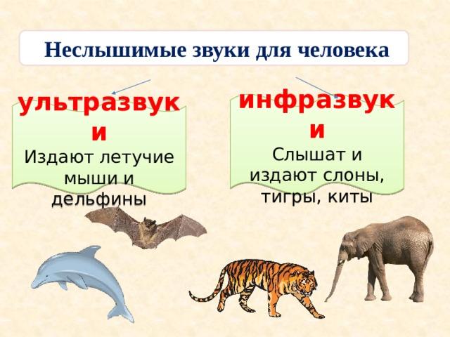 Неслышимые звуки для человека      инфразвуки Слышат и издают слоны, тигры, киты  ультразвуки Издают летучие мыши и дельфины