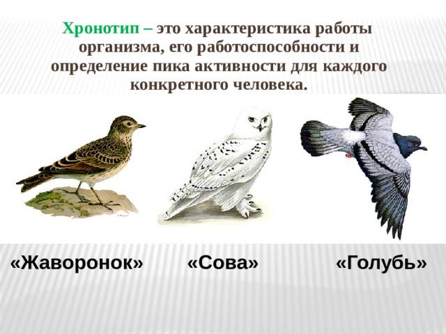 Хронотип – это характеристика работы организма, его работоспособности и определение пика активности для каждого конкретного человека.  «Жаворонок» «Сова» «Голубь»