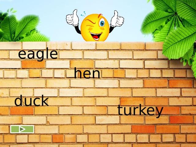 eagle hen duck turkey
