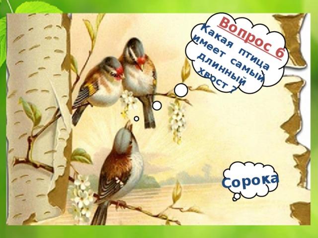 Вопрос 6 Какая птица имеет самый длинный хвост ? Сорока