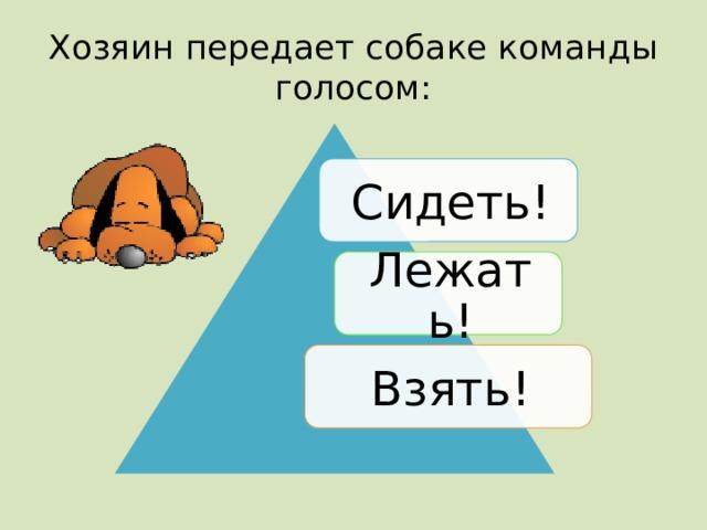 Хозяин передает собаке команды голосом: Сидеть! Лежать! Взять!