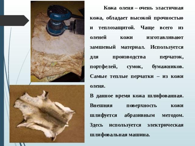 Кожа оленя–очень эластичная кожа, обладает высокой прочностью и теплозащитой. Чаще всего из оленей кожи изготавливают замшевый материал. Используется для производства перчаток, портфелей, сумок, бумажников. Самые теплые перчатки – из кожи оленя. В данное время кожа шлифованная. Внешняя поверхность кожи шлифуется абразивным методом. Здесь используется электрическая шлифовальная машина.